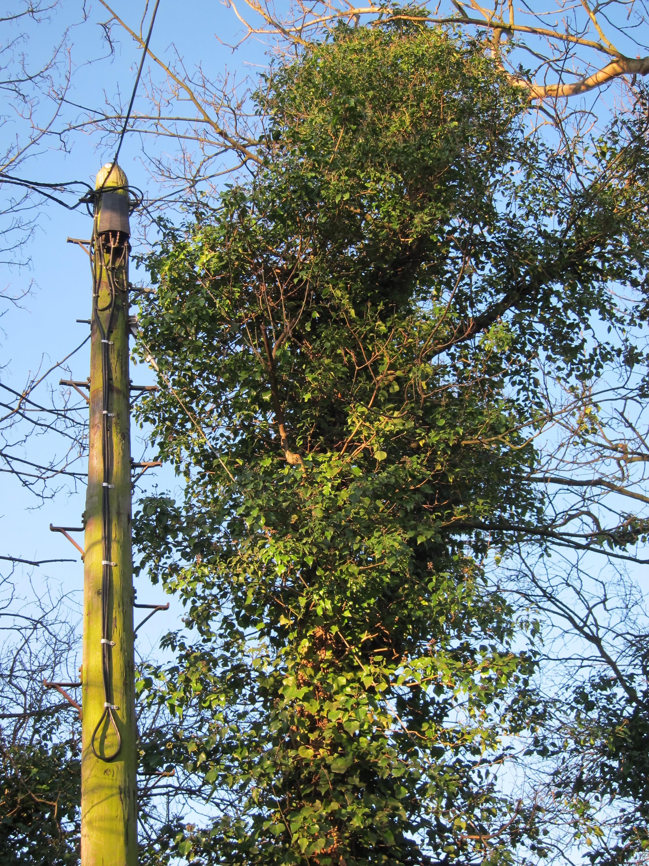 BT DP89 on Aston Lane